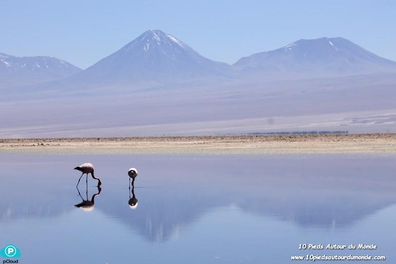 Désert d'Atacama - lagune