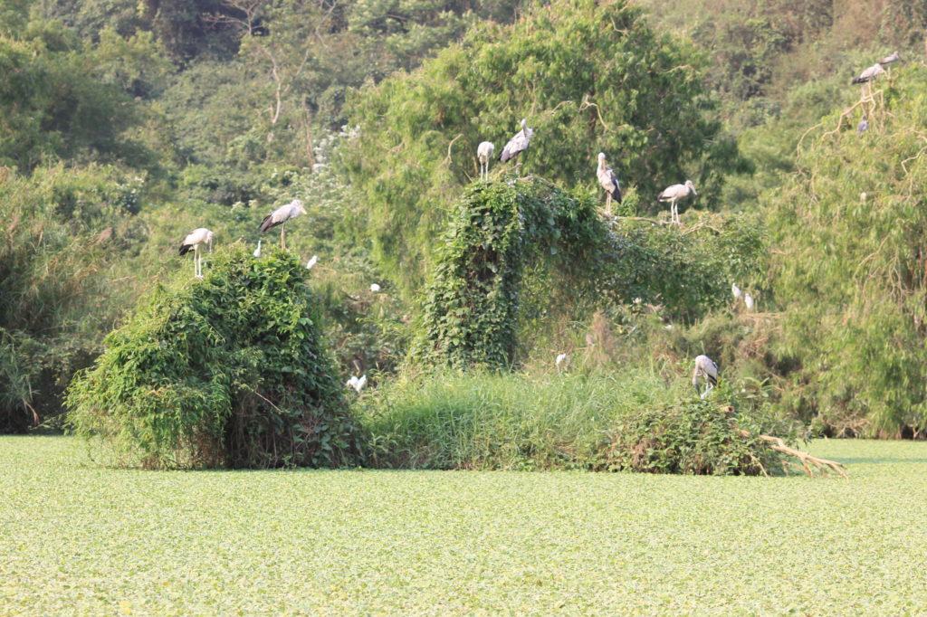 Thung Nham et parc aux oiseaux