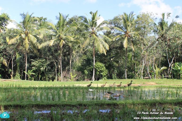Balade Keliki - Ubud