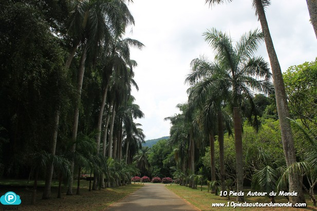 Allées de palmiers